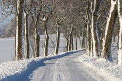 Camino arbolado del invierno Foto de archivo libre de regalías