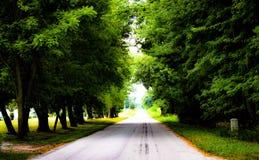 Camino arbolado hermoso fotos de archivo