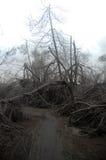 Camino arruinado con los treas muertos cubiertos con la ceniza vulcanic después de Bro fotos de archivo libres de regalías