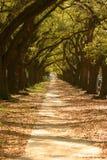 Camino bajo árboles Foto de archivo libre de regalías