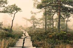 Camino brumoso Foto de archivo