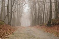 Camino brumoso Fotos de archivo libres de regalías