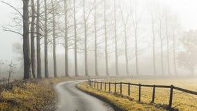 Camino brumoso Foto de archivo libre de regalías