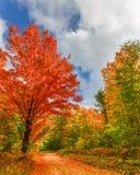 Camino a caer, impulsión escénica, parque de estado de los pinos de Hartwick, cerca del Grayling, MI Foto de archivo