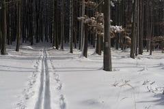 Camino a campo través del esquí Fotos de archivo