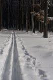 Camino a campo través del esquí Fotografía de archivo libre de regalías