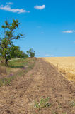 Camino cerca de un campo de trigo fotos de archivo