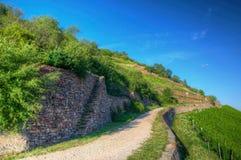 Camino cerca del Burg Ehrenfels, Ruedelsheim, Hesse, Alemania Fotografía de archivo libre de regalías