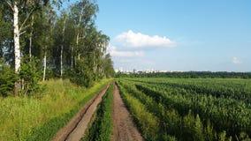 Camino cerca del campo verde - a la ciudad Imagenes de archivo