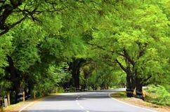 Camino con curvas en selva fotos de archivo