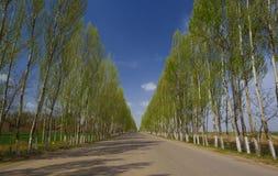 Camino con el árbol foto de archivo libre de regalías