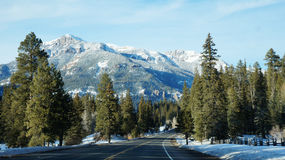 Camino con el árbol de los lucios en el invierno Imagen de archivo