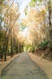 Camino con el bosque de bambú Fotos de archivo libres de regalías