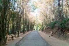 Camino con el bosque de bambú en Tailandia Foto de archivo libre de regalías