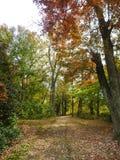 Camino con hojas caido en los toneleros charca, New Jersey Foto de archivo libre de regalías