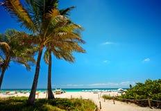 Camino con la palma de coco a la playa en Miami Beach, los E.E.U.U. Imagen de archivo libre de regalías