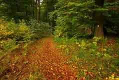 Camino con las hojas Fotografía de archivo libre de regalías
