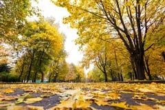 Camino con las hojas del amarillo en parque del otoño Fotografía de archivo libre de regalías