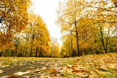 Camino con las hojas del amarillo en parque del otoño Imagen de archivo