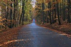 Camino con las hojas del colorfull en el otoño más forrest fotos de archivo libres de regalías