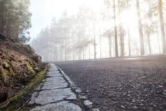Camino con las marcas de camino agrietadas en un bosque de niebla Imagen de archivo libre de regalías