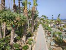 Camino con las palmeras Foto de archivo libre de regalías