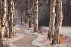 Camino con los árboles Fotografía de archivo