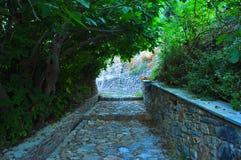 Camino con los árboles Imagen de archivo libre de regalías
