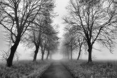Camino con niebla Imagen de archivo libre de regalías