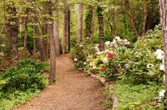 Camino con rhododendra Foto de archivo libre de regalías