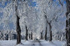 Camino congelado Foto de archivo libre de regalías
