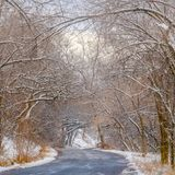 Camino cuadrado claro con el toldo de árboles nevosos en Salt Lake City fotos de archivo