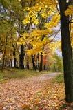 Camino cubierto con las hojas de arce Imagenes de archivo