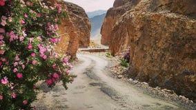 Camino cubierto con las montañas fotos de archivo libres de regalías