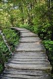 Camino cubierto de madera en bosque Imágenes de archivo libres de regalías