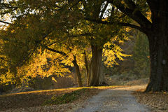 Camino curvado del otoño con los árboles grandes foto de archivo