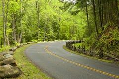Camino curvado en bosque Foto de archivo libre de regalías