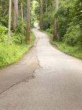 Camino curvado en bosque en la colina Imagen de archivo libre de regalías