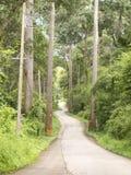 Camino curvado en bosque en la colina Fotos de archivo libres de regalías