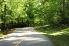 Camino curvado a través del bosque Foto de archivo libre de regalías