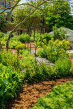 Camino curvado a través del jardín Fotografía de archivo libre de regalías