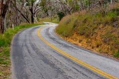 Camino Curvy con las líneas amarillas dobles en la más forrest Imagen de archivo