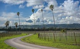 Camino Curvy a través de las palmeras y del viñedo de California Fotografía de archivo