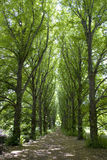 Camino de árboles Imágenes de archivo libres de regalías