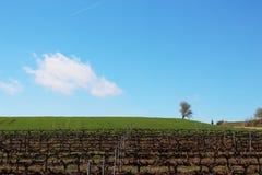 走通过不尽的葡萄园和绿色领域的香客在一个美好的春天早晨下, Camino de圣地亚哥的太阳 免版税库存图片