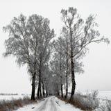 Camino de abedules en el invierno Foto de archivo libre de regalías