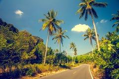 Camino de Asfalt con las palmeras Foto de archivo