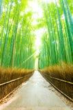 Camino de bambú V de Forest Morning God Ray Straight del árbol imagenes de archivo