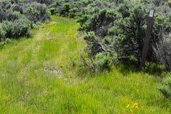 Camino de BLM con la margarita de Engelmann (Asteraceae) en hierba Imagenes de archivo