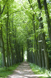Camino de bosque Imagen de archivo libre de regalías